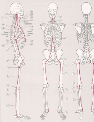 Underrated Pain Contributor Why Fascia May Be The Culprit